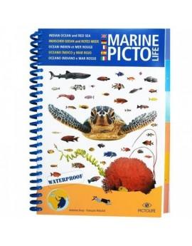 Pictolife Rode Zee en Indische Oceaan Visgids