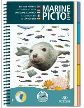 Eastern Atlantic Marine Pictolife Fish Guide