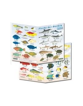 Sub-Base Fish Guide Caribbean Sea