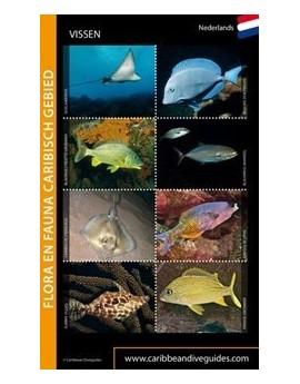 Vissenkaart Caribische Gebied