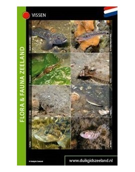 Vissenkaart Zeeland