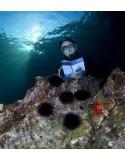 Pictolife Middellandse Zee Visgids
