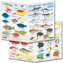 Fish Guides