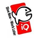 iQ Company